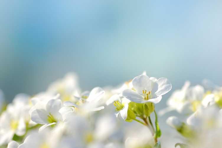 """Papy Jacquot (Jacques MORO) : """"C''est le printemps"""" 0"""